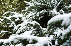 Green in winter Stock Photography