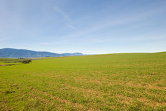 Green Winter fields with blue skies. Green fields during Winter with blue skies Royalty Free Stock Photos
