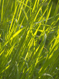 Green wire grass texture Stock Images