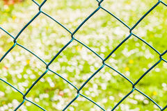 Green wire mesh on green grass and white daisies. Green wire mesh on the background of green grass and white daisies Royalty Free Stock Photos
