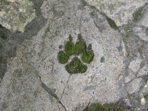 Green wolf paw, ecology concept Stock Photography
