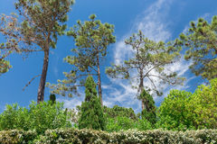 Green in Wolf Valley (Vale do Lobo), Portugal Royalty Free Stock Images