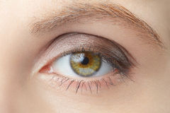 Green woman eye beauty with light brown make up Royalty Free Stock Photography