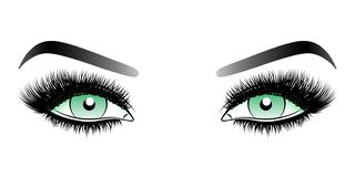 Green woman eyes with long false lashes with eyebrows. stock photography
