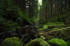 Green wood. The top of the mountain renon bolzano suedtirol Stock Image
