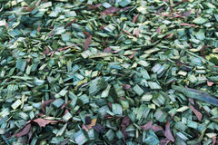 Green wood chips Royalty Free Stock Photo