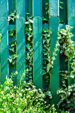 Green wood fence plant garden Stock Photo