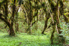Green wood forest Royalty Free Stock Image