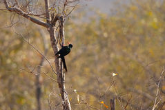 Green Wood Hoopoe Royalty Free Stock Photography