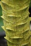 Green wood paml tropic Royalty Free Stock Photos