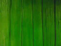 Green wood pattern Royalty Free Stock Images