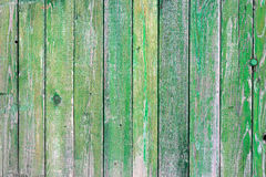 Green wood texture. Natural green wood texture with an array of knots and ring lines Stock Photos