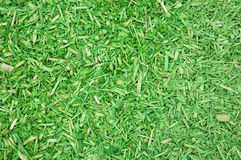Green woodchips Royalty Free Stock Image