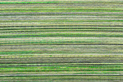 Green wooden background or texture. A bamboo mat Royalty Free Stock Photos