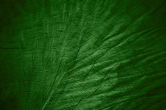 Green wooden background Royalty Free Stock Photo