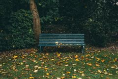 Green Wooden Bench Near Brown Tree Trunk With Leaves Stock Images