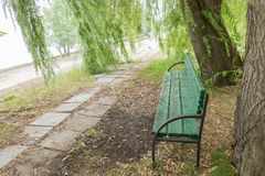 Green wooden bench in the shade of a willow tree. City park.  royalty free stock photos