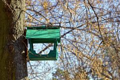 Green wooden bird feeder on the tree Royalty Free Stock Images
