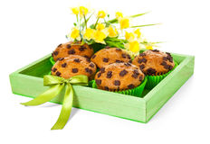 Choco chip muffins decorated for spring occasion. Green wooden box with choco chip muffins and daffodils Royalty Free Stock Images