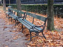 Autumn in park Stock Photography