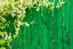 Green wooden fence and plant Royalty Free Stock Images