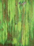 Green wooden Texture Stock Photo