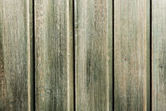 Green wooden wall Royalty Free Stock Image