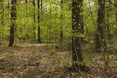 Green woodland Royalty Free Stock Images