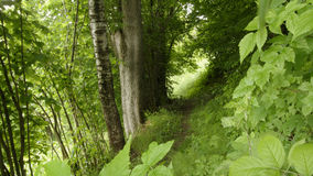 Green woodland Royalty Free Stock Photo