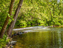 Green Woodlands Stream Royalty Free Stock Photography