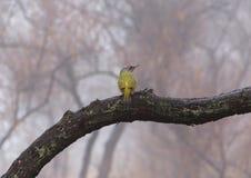 Green woodpecker Royalty Free Stock Image