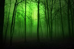 Green Woods. Foggy  woods with a deep green filter in the winter time