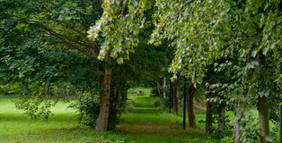 Green Woods Royalty Free Stock Photography