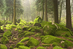 Green woods Royalty Free Stock Image