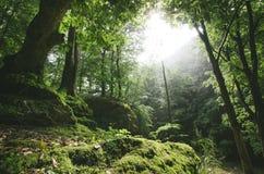 Green woods Stock Photos