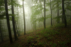 Green woods with mist Royalty Free Stock Photos