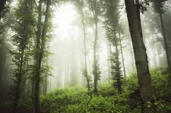 Green woods with mist after rain Stock Photos