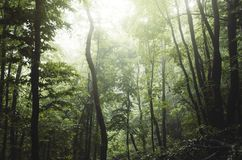 Green woods in the summer royalty free stock photo