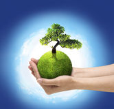 Green world. Human hands holding green planet with bloom tree Stock Photo