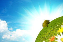 Green world. Concept with colored flower Royalty Free Stock Image
