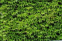 Green world Stock Photos