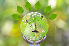 Green world and butterfly in man hand, royalty free stock image