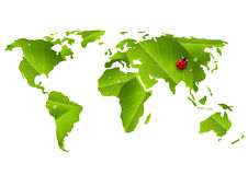 Green World map with ladybug Royalty Free Stock Photo