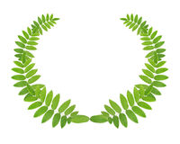 Green Wreath Stock Images