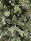 Green Xmas tree with out decoration. Green Xmas tree decoration background Royalty Free Stock Images