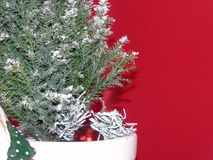 A green xmas tree with snow. A white pot with a green spruce Xmas tree covered in snow with a red background stock images