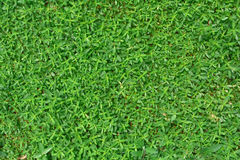 Green yard background Royalty Free Stock Photography