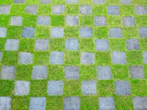 Green yard in check pattern Stock Image