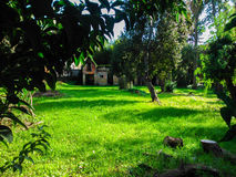 Villa Rossa, Corfu, Greece. Trees on lawn of Villa Rossa, Corfu, Greece Stock Image