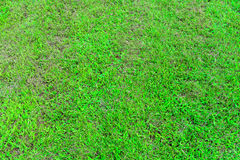 Green yard. Green grass outdoor,medow background,space field Royalty Free Stock Image
